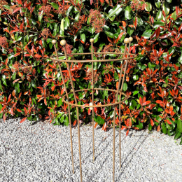 Tall two ring herbaceous supports