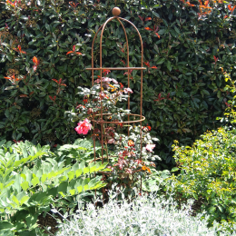 Rose and Clematis cage